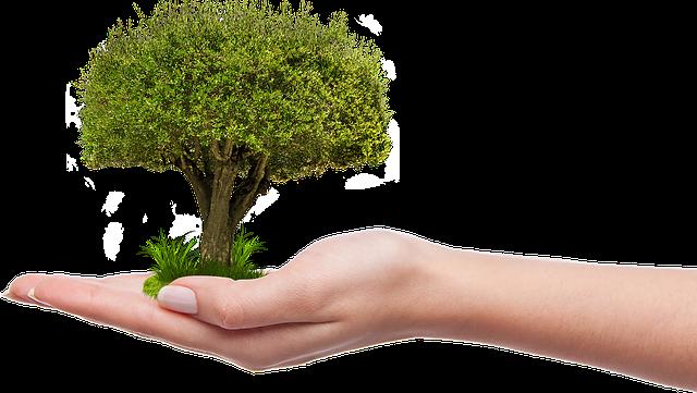 Приоритетный проект «Экология» и роль каждого жителя
