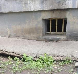 доступ кошкам в подвалы